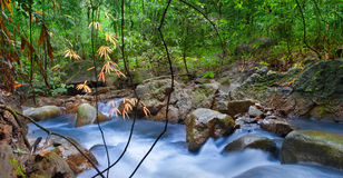 Mountain river in tropical rain forest Stock Photos