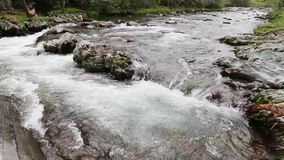 Mountain river. Water cascades over rocks in Great Smoky Mountains National Park stock video footage