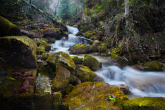 Mountain river waterfall in the autumn forest Stock Photography
