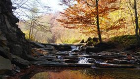 The mountain river with waterfall in autumn forest. The leaves changing color. The mountain river with waterfall in autumn forest.The leaves changing color and stock video