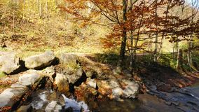 The mountain river with waterfall in autumn forest at amazing sunny day. The mountain river with waterfall in autumn forest. The leaves changing color and stock footage