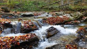 The mountain river with waterfall in autumn forest at amazing sunny day. The mountain river with waterfall in autumn forest. The leaves changing color and stock video footage