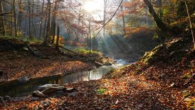 The mountain river in autumn forest at amazing sunny day. The mountain river with waterfall in autumn forest and the sun shining through the foliage.The leaves royalty free stock photography