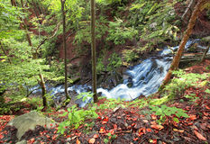 Mountain River Waterfall In Wild Carpathian Forest Royalty Free Stock Photo