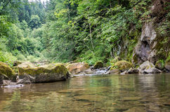 Mountain river with waterfall and rocks at national park in the Skole Beskids near Lviv Royalty Free Stock Photo