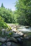 Mountain river and wet stones Stock Photos