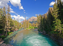 Mountain river in the Wilds Stock Photos