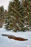 Mountain river in the winter Stock Photos