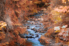 Mountain river in the wood. Stock Image