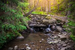 Mountain River in the wood. Ukrainian Carpathians. Mountain River in the wood landscape. Ukrainian Carpathians Royalty Free Stock Images