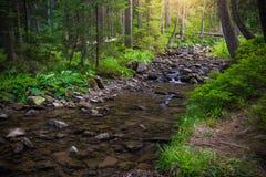 Mountain River in the wood. Ukrainian Carpathians. Mountain River in the wood landscape. Ukrainian Carpathians Stock Photography