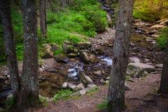 Mountain River in the wood. Ukrainian Carpathians. Mountain River in the wood landscape. Ukrainian Carpathians Royalty Free Stock Photo