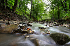 Mountain River in the wood Stock Images