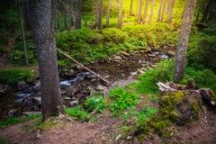 Mountain River in the wood. Ukrainian Carpathians. Mountain River in the wood landscape. Ukrainian Carpathians Stock Image