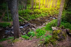 Mountain River in the wood. Ukrainian Carpathians. Mountain River in the wood landscape. Ukrainian Carpathians Stock Photos
