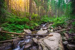 Mountain River in the wood. Ukrainian Carpathians. Mountain River in the wood landscape. Ukrainian Carpathians Royalty Free Stock Photography