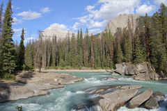 Mountain River - Yoho National Park Royalty Free Stock Photography