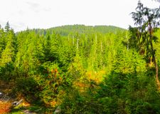 Mountain rivers in the forests near Vancouver. September 2014.British Columbia, Canada stock image
