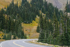 Mountain Road. Road through alpine forest along Hurricae Ridge in Olympic National Park, Washington State Royalty Free Stock Image