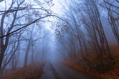 Mountain road in autumn colours Royalty Free Stock Image