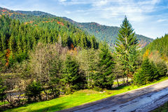 Mountain road in autumn forest. Empty asphalt road  near the coniferous forest in autumn Royalty Free Stock Photos