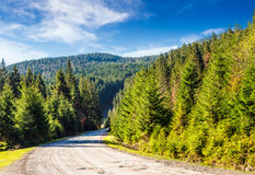 Mountain road in autumn forest. Old curve asphalt road  near the spruce forest in autumn Stock Images