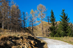 Mountain road in autumn Royalty Free Stock Images