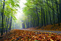 Mountain road in a beautiful autumn forest. Stock Image