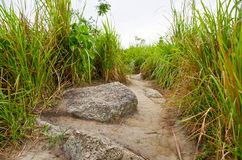Mountain Road, Broga Hill. Mountain walking and hiking, healthy lifestyle Stock Photos