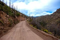 Mountain Road with burned trees from fire. stock image
