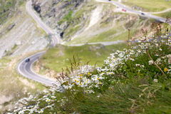 Mountain road with camomiles foreground. Scenic view of mountain road with camomiles foreground Royalty Free Stock Photos