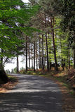 Forest road. Mountain Road curve in a forest of the National Park of Peneda Geres in the north of Portugal stock photos