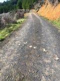Mountain road with deer elk scat poop. On ground in royalty free stock image
