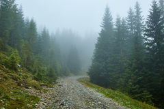 Mountain road in a foggy day Stock Image