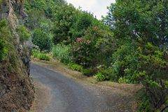 Mountain road in the forest, Sao Miguel, Azores, royalty free stock photo