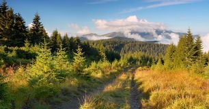 Mountain road in the forest stock photography