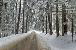 Mountain road by forest in winter. Rila mountain, Borovetz Stock Photos