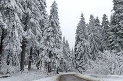 Mountain road by forest in winter. Rila mountain, Borovetz Stock Image