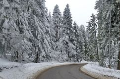 Mountain road by forest in winter. Rila mountain, Borovetz Royalty Free Stock Photos