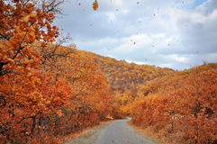 Mountain road in golden autumn Stock Photo