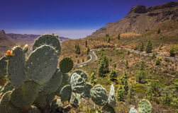 Mountain road in Gran Canaria Stock Image