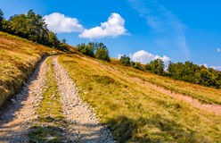 Mountain road through hillside with beech forest. Lovely grassy slopes in fine autumn afternoon weather Stock Image