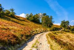 Mountain road through hillside with forest. Lovely grassy slopes in fine autumn afternoon weather Royalty Free Stock Photos