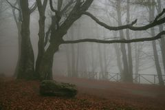 Mountain Road In The Foggy Forest Of Monte Cucco, Umbria Stock Images