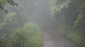 Mountain road, Japan. Morning mist in japanese mountain Royalty Free Stock Image