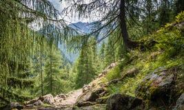 Mountain road landscape. Rabbi valley, Trentino Alto Adige, Italy Royalty Free Stock Photo