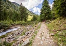 Mountain road landscape. Rabbi valley, Trentino Alto Adige, Italy Stock Photos