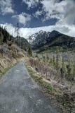Mountain road. Narrow gray mountain road between trees stock image