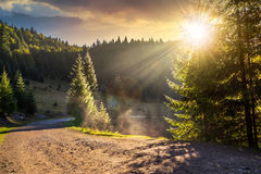 Mountain road near the coniferous forest with cloudy morning sky Royalty Free Stock Photography