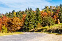 Mountain road near forest under cloudy sky. Empty asphalt mountain road near the forest with cloudy sky in morning light Royalty Free Stock Images